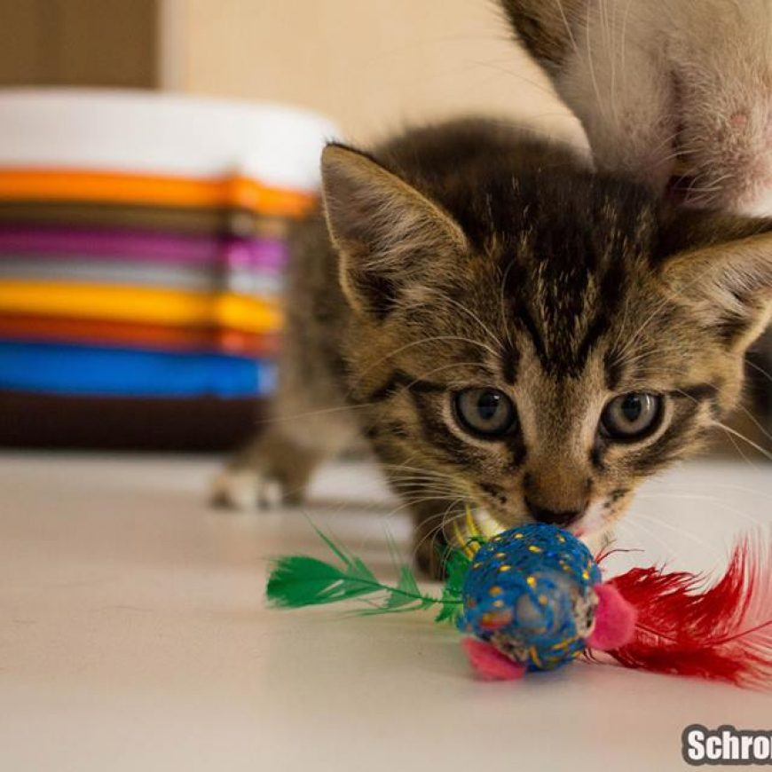 Schronisko wstrzymuje zbiórkę karmy dla kotów
